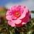 Twitter result for Blooming Marvellous from ShrewsBloom