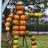 hs_pumpkins