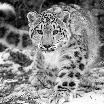 SnowLeopardLass | Social Profile