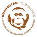 Orangutan Foundation's Twitter Profile Picture
