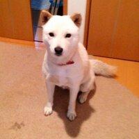 Momoko | Social Profile