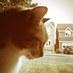 @freda_the_cat