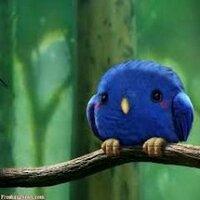 hummingbird | Social Profile