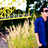 Chumaidi_Luthfi