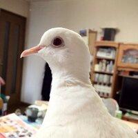 春日野飛鳥 | Social Profile