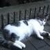 cat_crepe
