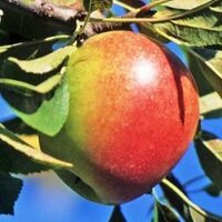 AAPL Tree | Social Profile