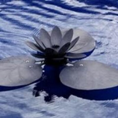 lotus sutra | Social Profile
