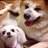 dogsmile_bot