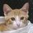 lovecats_shfly