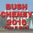 bushcheney2016 profile