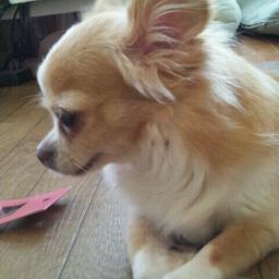yhakase Hiro Social Profile