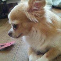 yhakase Hiro | Social Profile