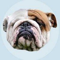 The Bullblog | Social Profile