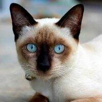 Cat84 | Social Profile