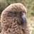 angrysunbird profile