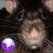 Twitter result for BBC Online Shop from Ronnie_the_Rat