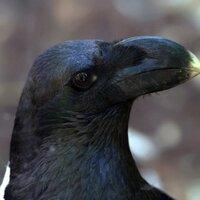 Corvus Whiteneck   Social Profile