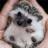 とことんハリネズミ画像 harinezumi_pic のプロフィール画像