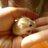 The profile image of akane_zi1