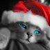 top sakallı kedi's Twitter Profile Picture