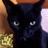 blackcat_f14
