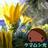 Moca_Kinema