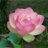 waling_waling1 profile
