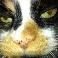 CassieMeows | Social Profile