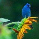 طائر السلام (@0123445a) Twitter