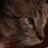 @CatsPhilosoFurr