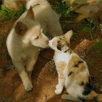 白い山猫(即廃炉に一票) | Social Profile
