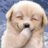 The profile image of kusukusu_tweet