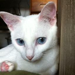 仮の名は麻耶、猫になれたら Social Profile