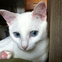 仮の名は麻耶、猫になれたら | Social Profile