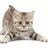datsumou_cats
