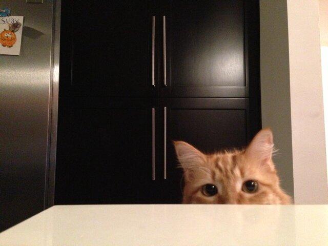Snacks the cat Social Profile