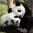 Twitter result for Superdrug from PandaBakesCakes