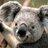 panda koalaeucaly のプロフィール画像