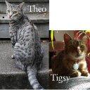 theotigsy