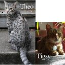 Theo & Tigsy (@theotigsy) Twitter