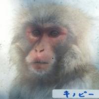 きの | Social Profile