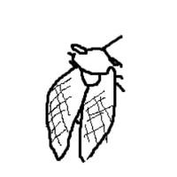 秋兎 | Social Profile