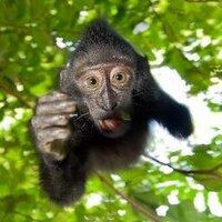 Drunken Monkey | Social Profile
