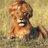 aya-bear ayabearmaru のプロフィール画像