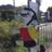 The profile image of Hokurozamurai