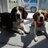 agilityhounds