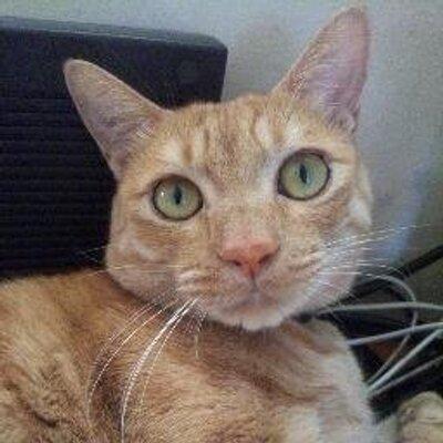 三毛猫 | Social Profile