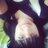 beliy_zayac
