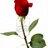 rosie avatar